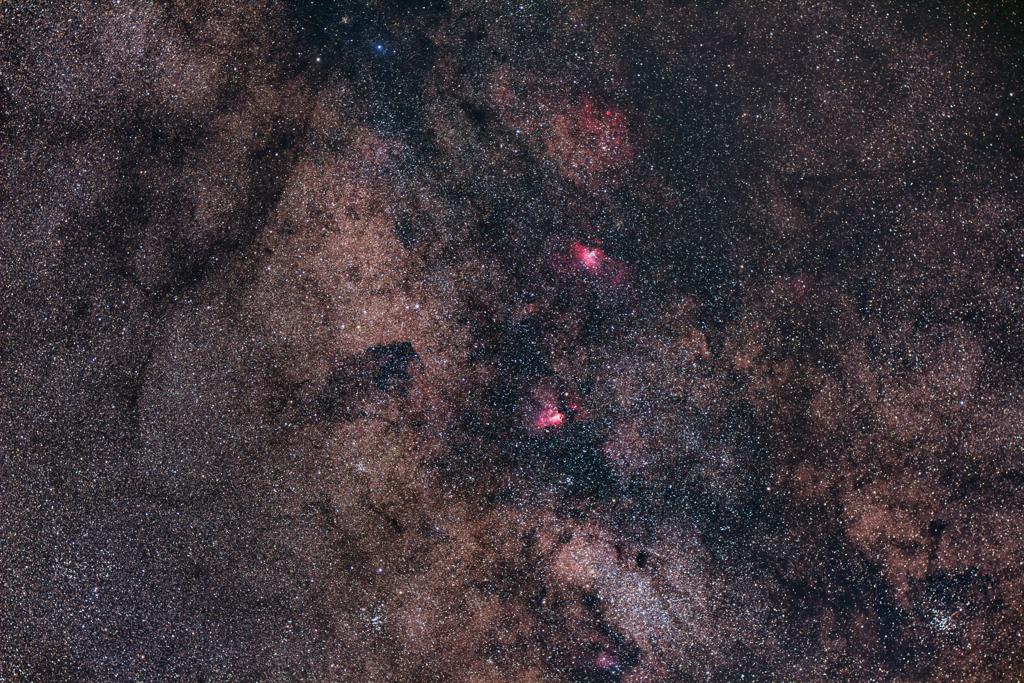 バンビが見上げる星空