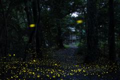 竹取物語 2020 《第25章 黄色い絨毯》