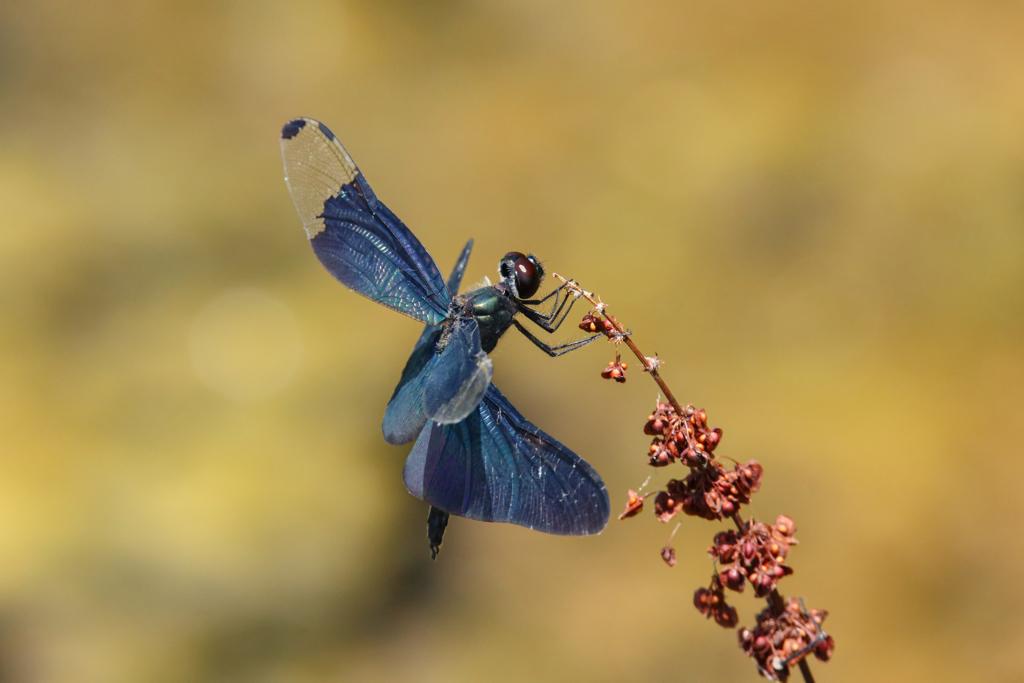 自慢の翅を披露