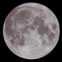 Perfect Sturgeon Moon ~完全無欠のチョウザメ満月~