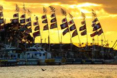 漁港の正月 ③