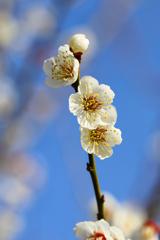 光のどけき春の日