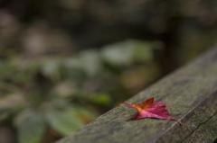 乙女渓谷の秋 ~秋の一コマ~