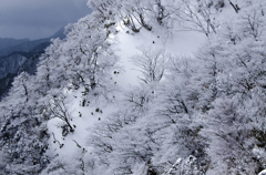 鈴鹿 斜面の樹氷