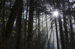 八ヶ岳 木漏れ日