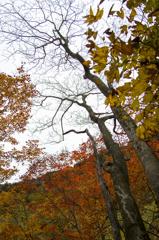 乙女渓谷の秋 ~冬支度~