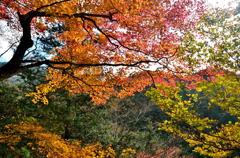 乙女渓谷の紅葉 2
