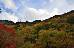 乙女渓谷の紅葉 5