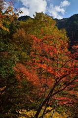 乙女渓谷の紅葉 3