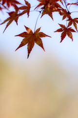 秋ふんわり