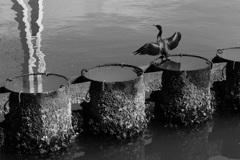 羽を乾かす鳥