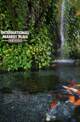 INTERNATIONAL MARKET PLACE