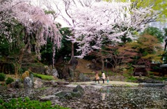Walking with family under cherry blossom