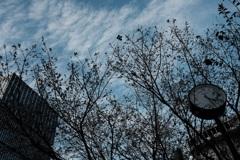 都会に咲くジュウガツザクラ