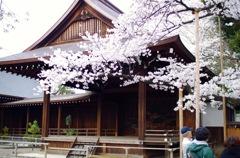 靖国神社 東京の開花を知らせるサクラ