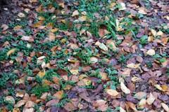 色が増える時期、秋ですな。