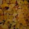 〜金色の絨毯に〜