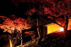 築地塀の夜秋
