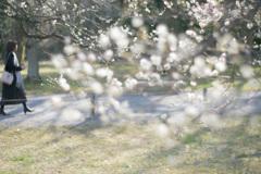 春に向かう