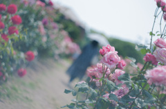 roses and parasol