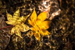 水中の落葉