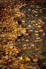 流れ着く紅葉