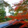 葉の色が変わる頃