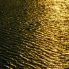 黄金に輝く桂川