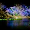 嵐山 花灯篭 (6)