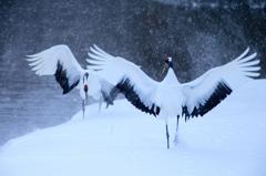 雪とともに舞う