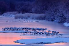 雪裡川の塒