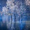 念願の青い池
