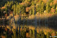 紅葉の自然湖