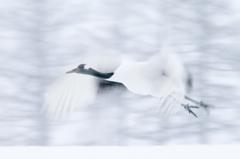 雪空に翔く