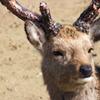 王子動物園~鹿~