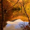 Memories autumn...