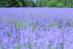 Purple world...