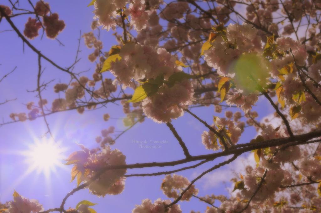 Spring sunlight...