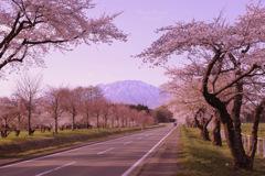 Japanese spring...