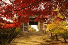 Autumn entrance...