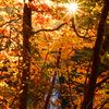 Shining autumn...