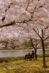 Under the cherry blossoms...
