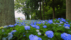 Blue Paradise...