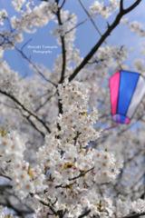 Spring full bloom...