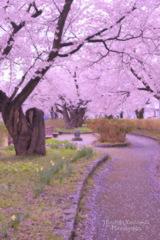 Spring promenade...