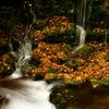 Autumn symphony...