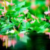 桃色☆熱帯雨林