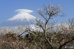 富士と白梅
