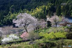 山寺に春が来た!