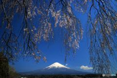 枝垂れ富士